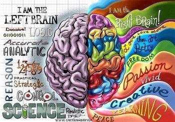 leva i desna hemisfera